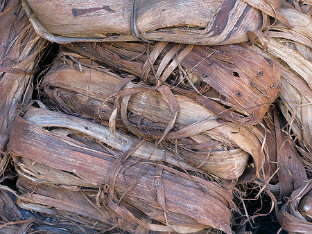Raw amate bark